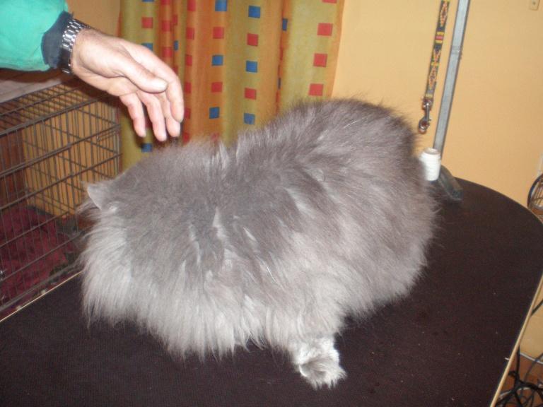 náš kočičí klient
